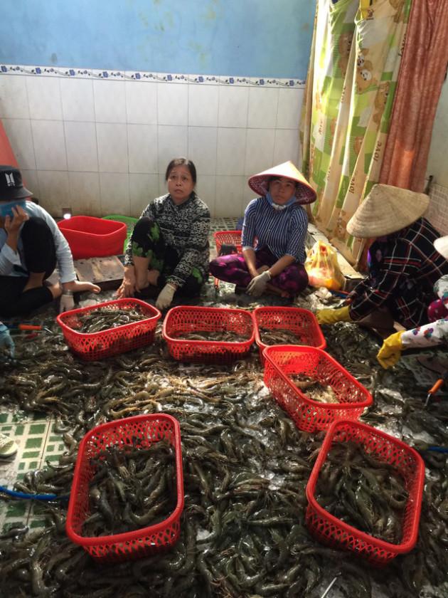 Bắt quả tang cơ sở đang đưa tạp chất vào tôm nguyên liệu tại Kiên Giang