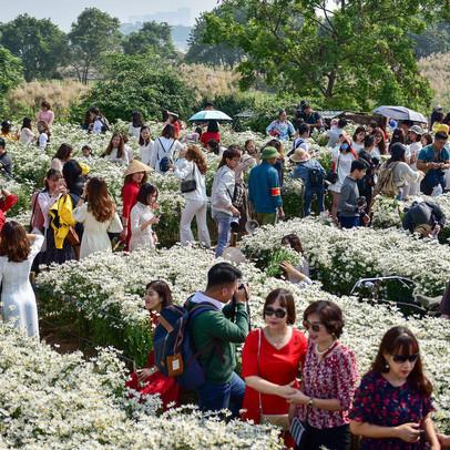 """Cúc hoạ mi """"hút"""" khách đến vườn hoa Nhật Tân"""