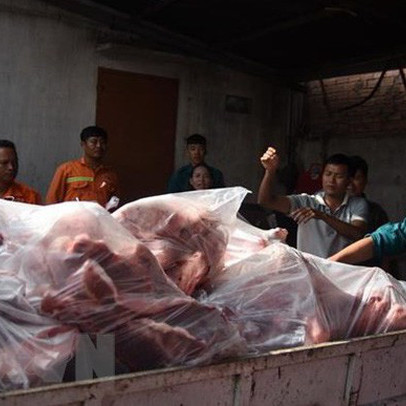 Hai container thịt lợn tại cơ sở làm giò chả nhiễm dịch tả châu Phi