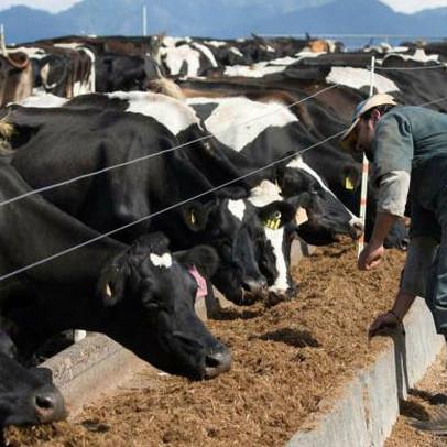 Sự bùng nổ của thị trường hàng hoá lan rộng, giá sữa dự kiến sẽ tăng cao chưa từng thấy