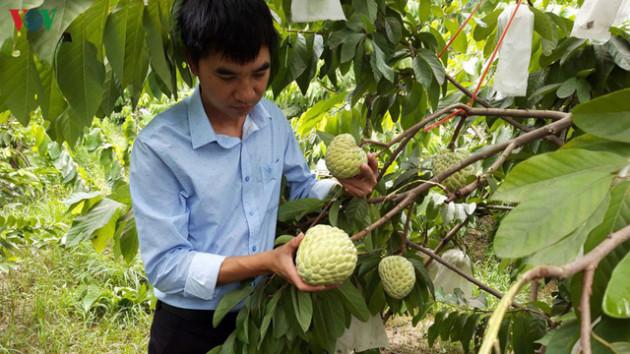 Vì sao nhiều hàng Việt Nam xuất khẩu bị gây khó? - Ảnh 1.