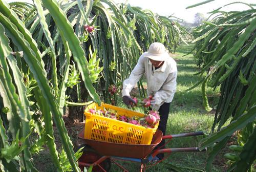 Bắt đầu từ thị trường, nông nghiệp chờ cơ hội để bứt phá
