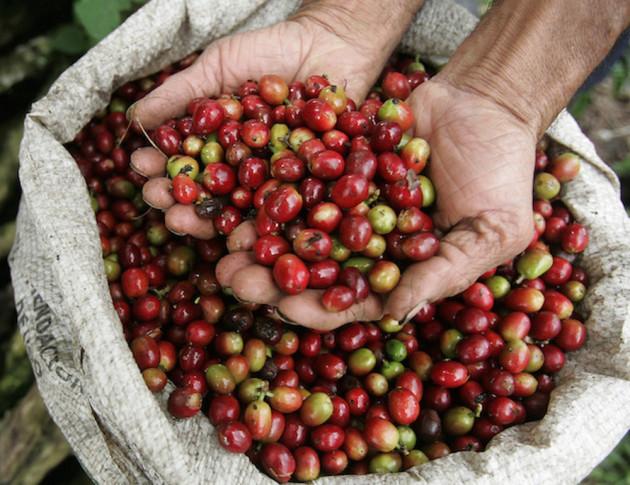 Giá nông sản hôm nay 22/2: Giá cà phê bất ngờ tăng mạnh 300 đồng/kg