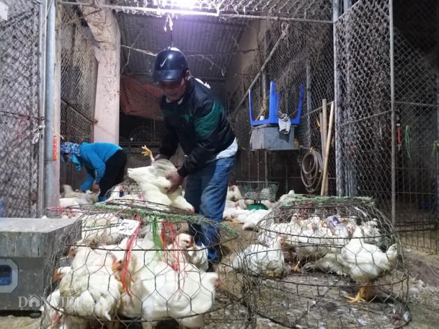 """Sự thật về chuyện giá gà """"rẻ như rau"""", chỉ 8.000 đồng/kg"""